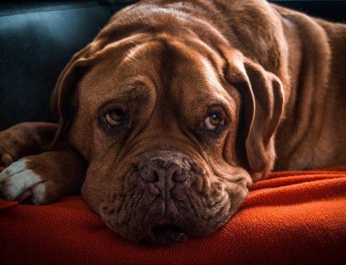 Overstappen op ander hondenvoer