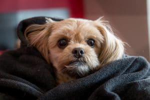 Puppy hond