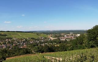 loire wijngaarden
