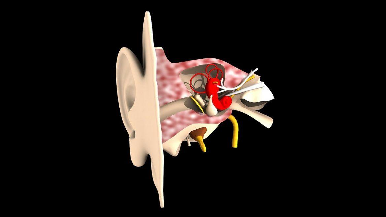 oor-binnenkant