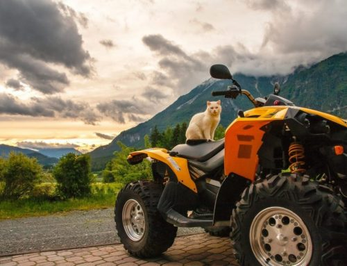 Test de duurzame Yamaha Grizzly Quads